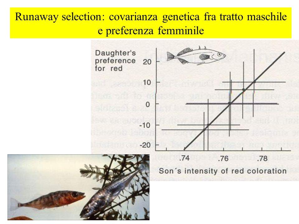 Runaway selection: covarianza genetica fra tratto maschile e preferenza femminile