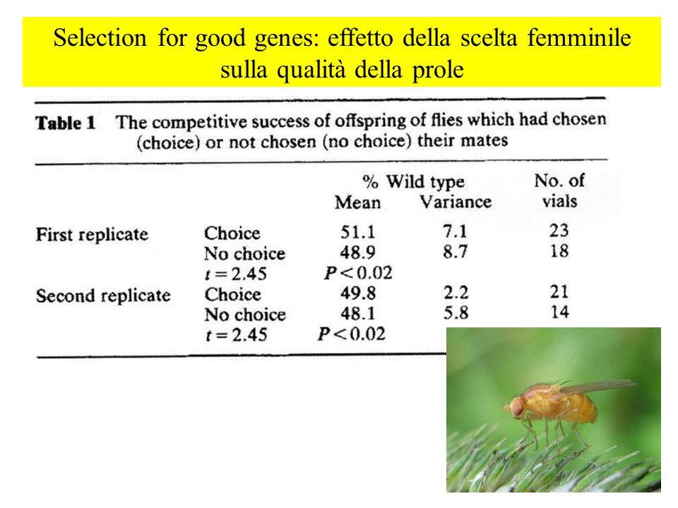 Selection for good genes: effetto della scelta femminile sulla qualità della prole