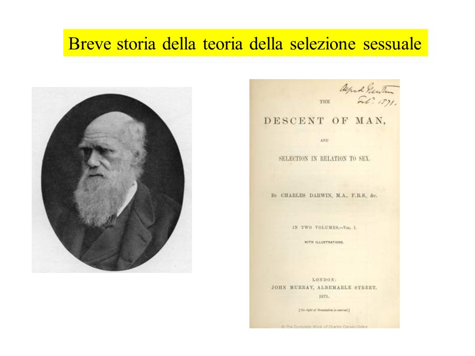 Breve storia della teoria della selezione sessuale