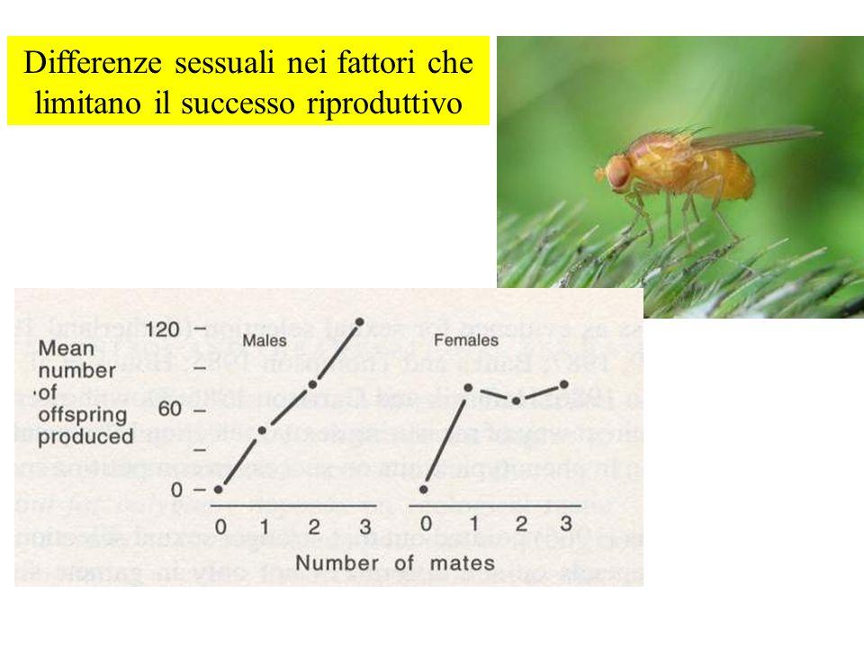Differenze sessuali nei fattori che limitano il successo riproduttivo