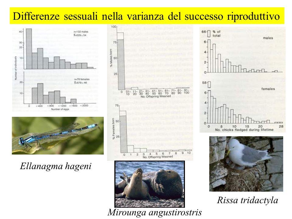 Differenze sessuali nella varianza del successo riproduttivo