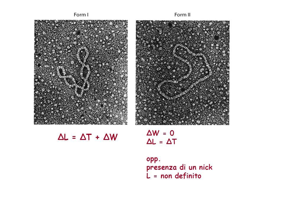 ΔW = 0 ΔL = ΔT opp. presenza di un nick L = non definito ΔL = ΔT + ΔW