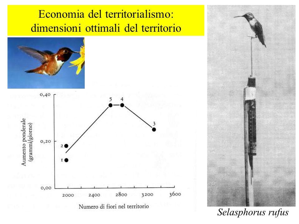 Economia del territorialismo: dimensioni ottimali del territorio