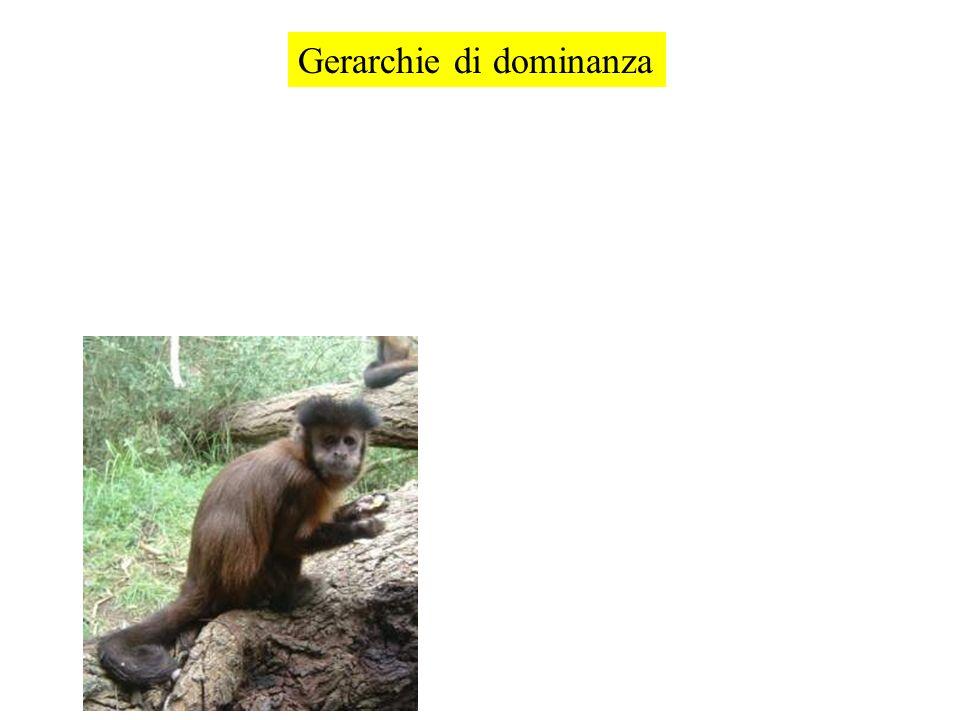 Gerarchie di dominanza