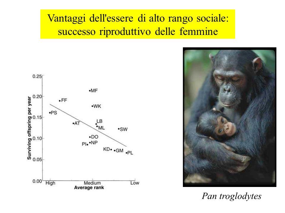 Vantaggi dell essere di alto rango sociale: successo riproduttivo delle femmine