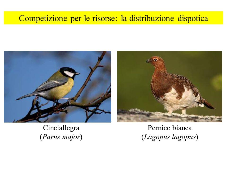 Competizione per le risorse: la distribuzione dispotica