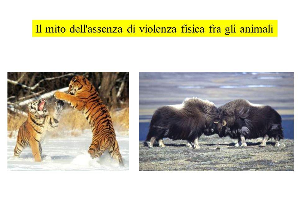 Il mito dell assenza di violenza fisica fra gli animali