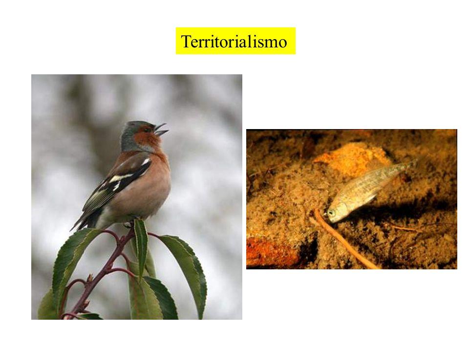 Territorialismo