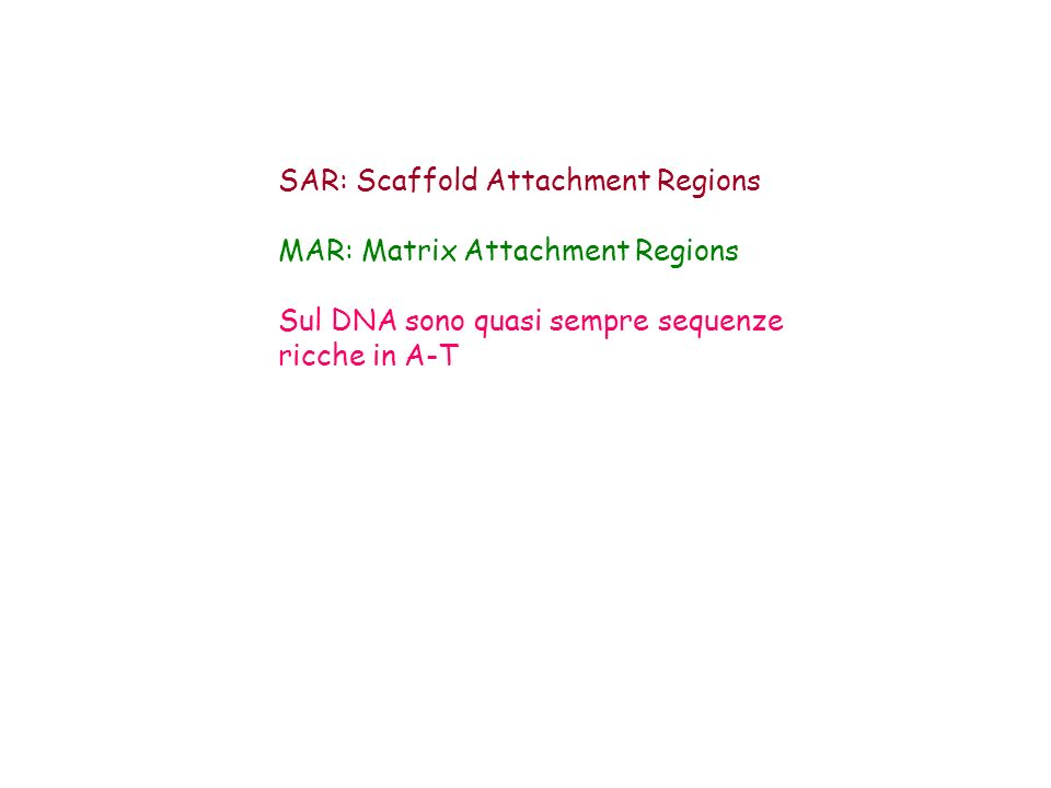 SAR: Scaffold Attachment Regions