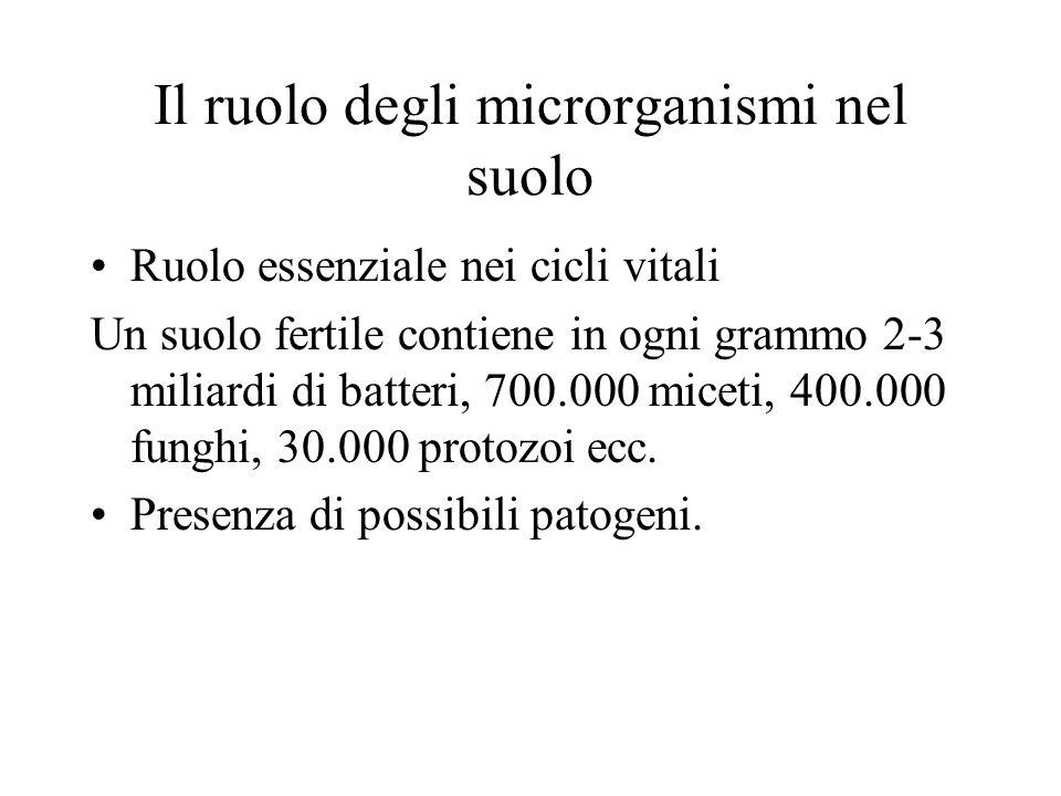 Il ruolo degli microrganismi nel suolo