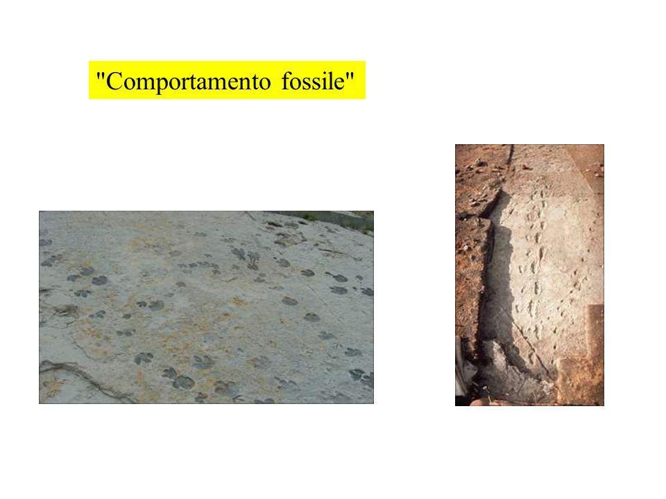 Comportamento fossile