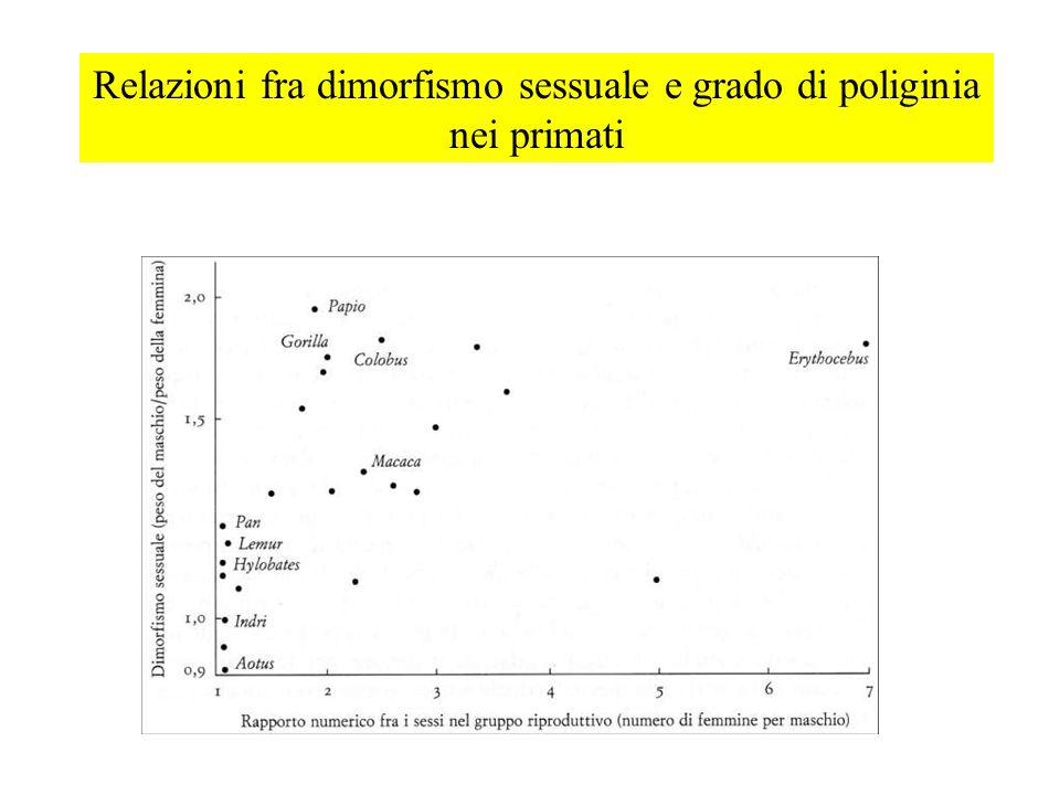 Relazioni fra dimorfismo sessuale e grado di poliginia