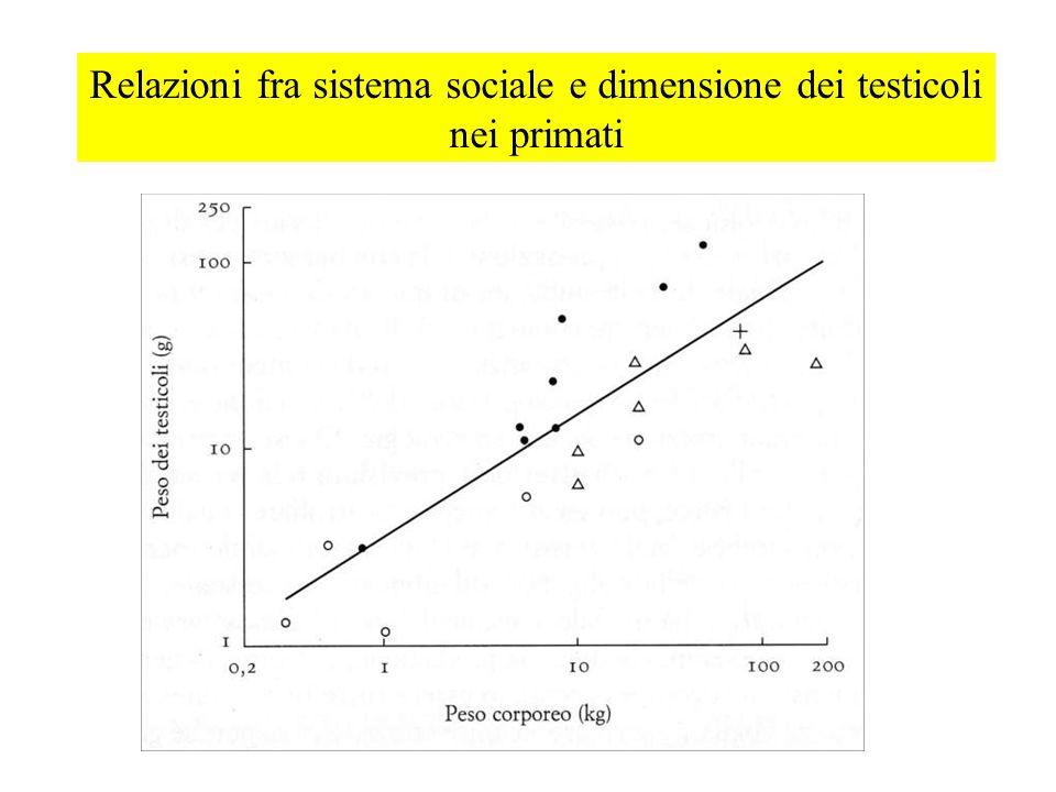 Relazioni fra sistema sociale e dimensione dei testicoli