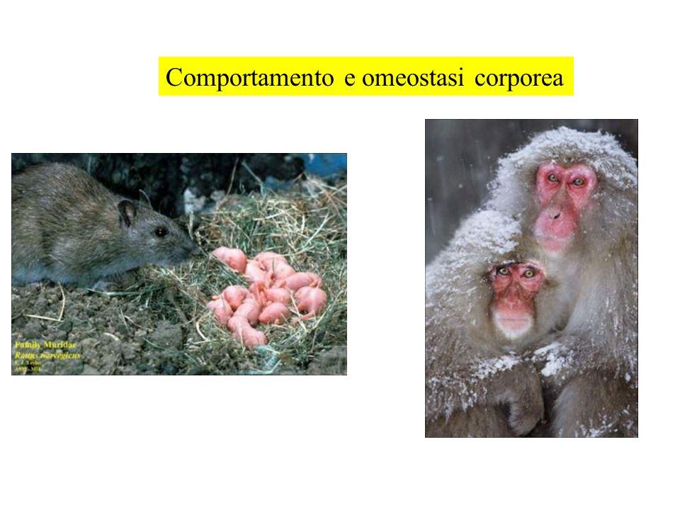 Comportamento e omeostasi corporea