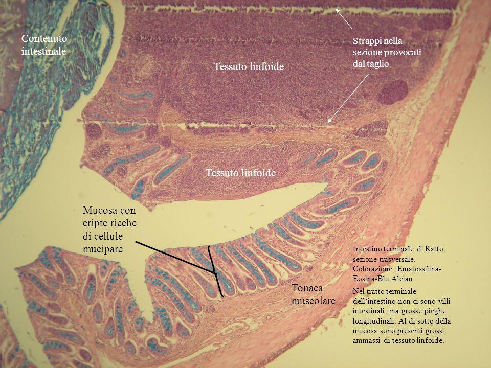 Contenuto intestinale
