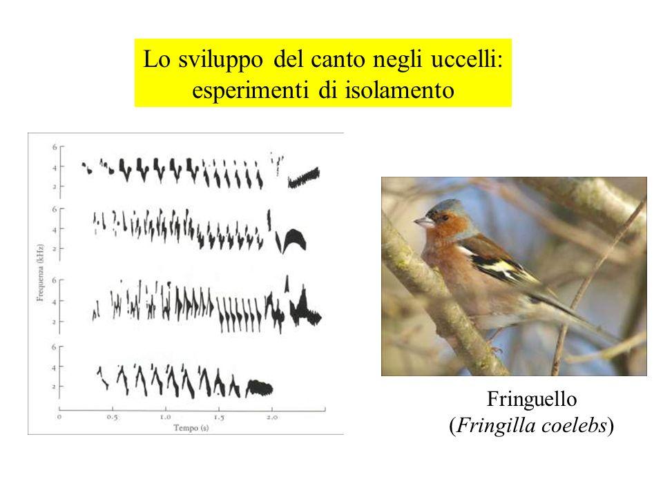 Lo sviluppo del canto negli uccelli: esperimenti di isolamento