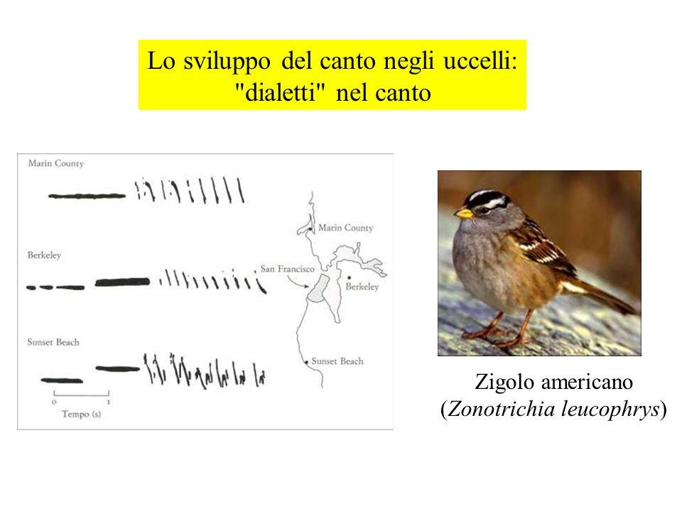 Lo sviluppo del canto negli uccelli: dialetti nel canto