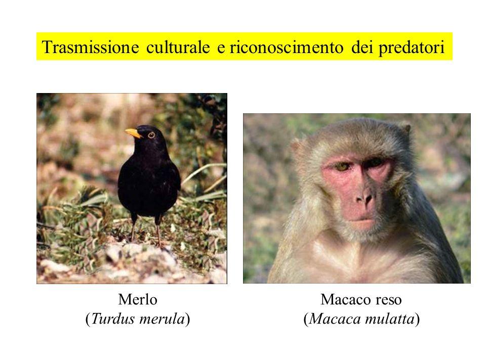Trasmissione culturale e riconoscimento dei predatori