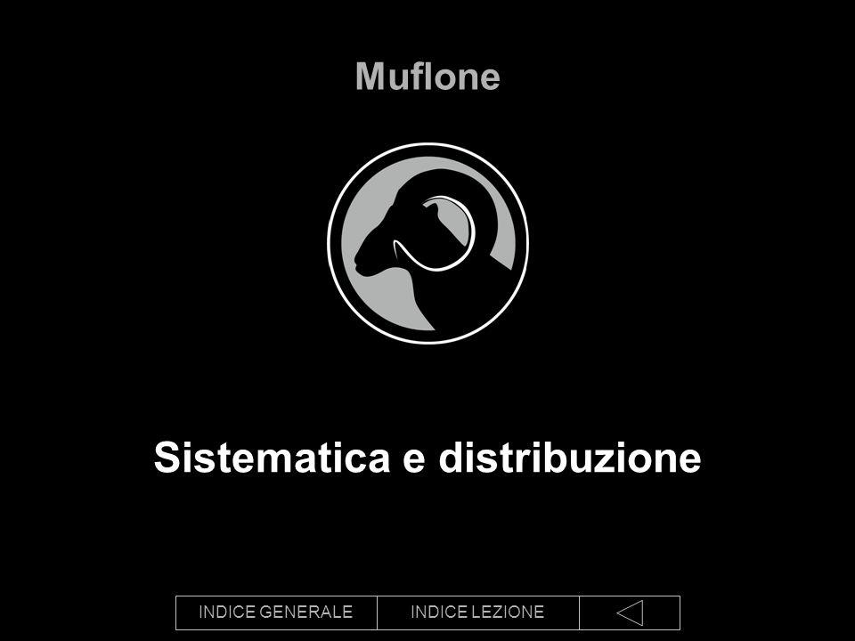 Sistematica e distribuzione