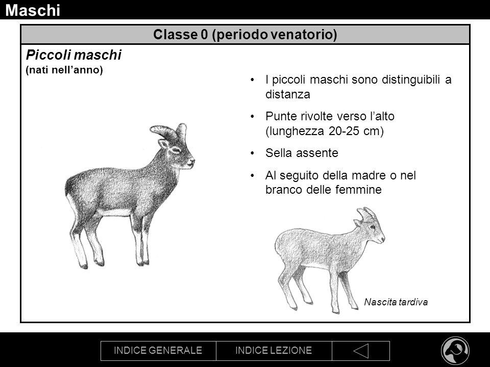 Classe 0 (periodo venatorio)