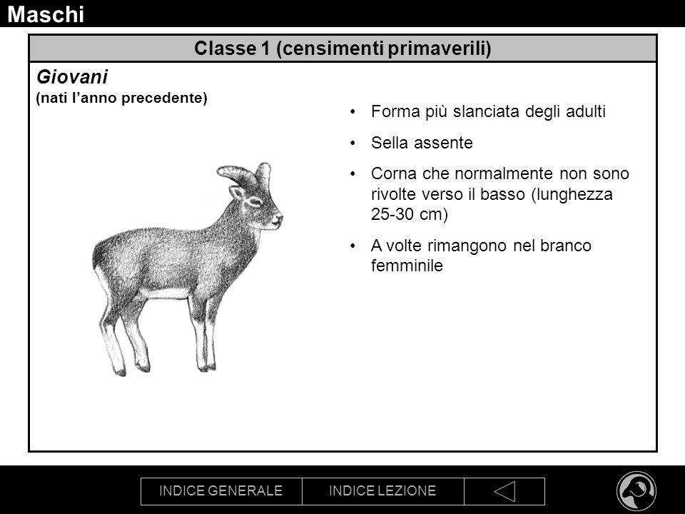 Classe 1 (censimenti primaverili)