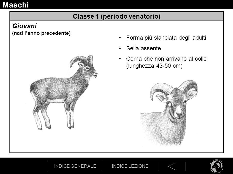 Classe 1 (periodo venatorio)