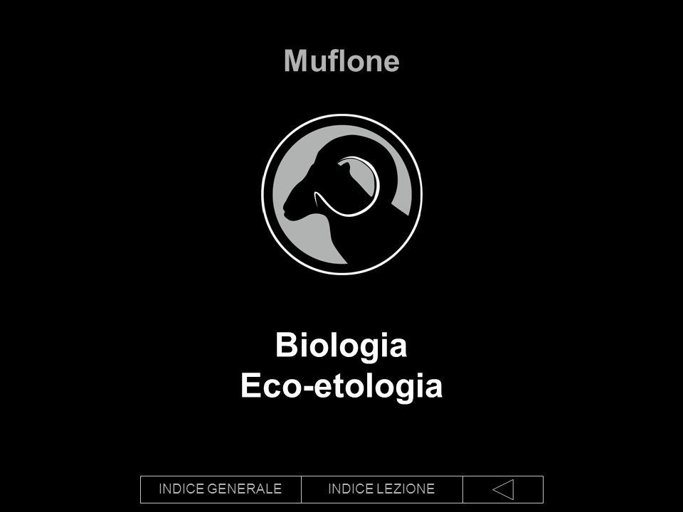 Biologia Eco-etologia