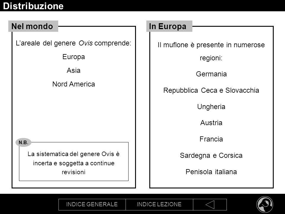 Distribuzione Nel mondo In Europa L'areale del genere Ovis comprende:
