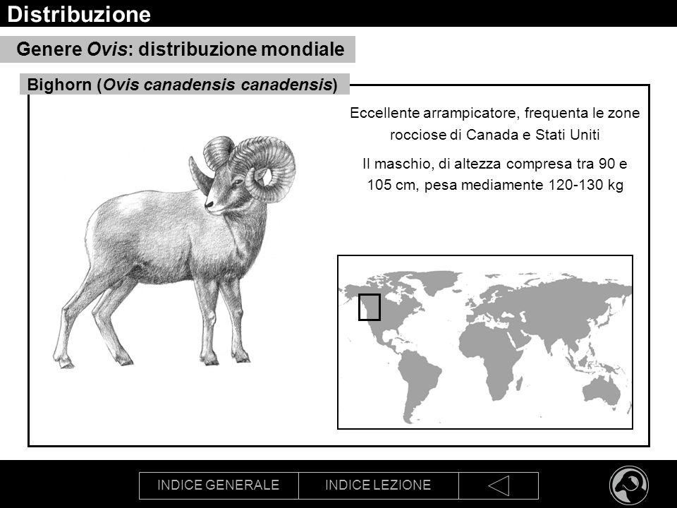 Distribuzione Genere Ovis: distribuzione mondiale