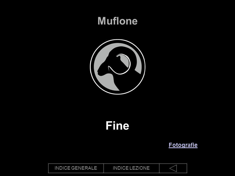 Muflone Fine Fotografie