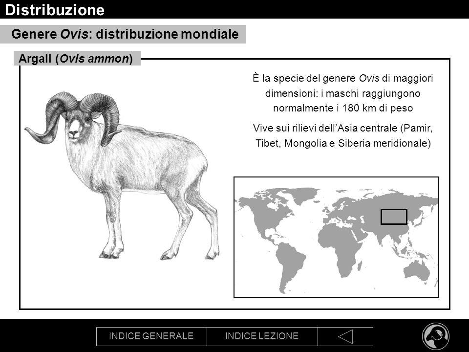 Distribuzione Genere Ovis: distribuzione mondiale Argali (Ovis ammon)