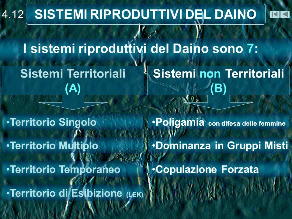 SISTEMI RIPRODUTTIVI DEL DAINO Sistemi non Territoriali