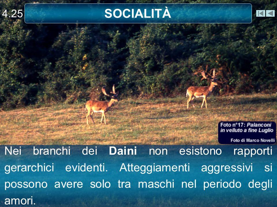 4.25 SOCIALITÀ.