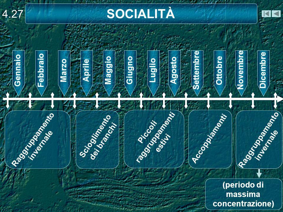 SOCIALITÀ 4.27 Gennaio Febbraio Marzo Aprile Maggio Giugno Luglio