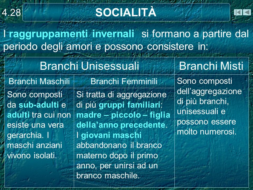 SOCIALITÀ Branchi Unisessuali Branchi Misti