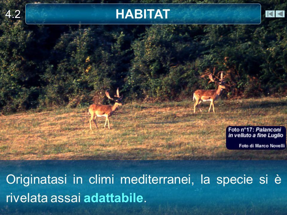 4.2 HABITAT Originatasi in climi mediterranei, la specie si è rivelata assai adattabile.