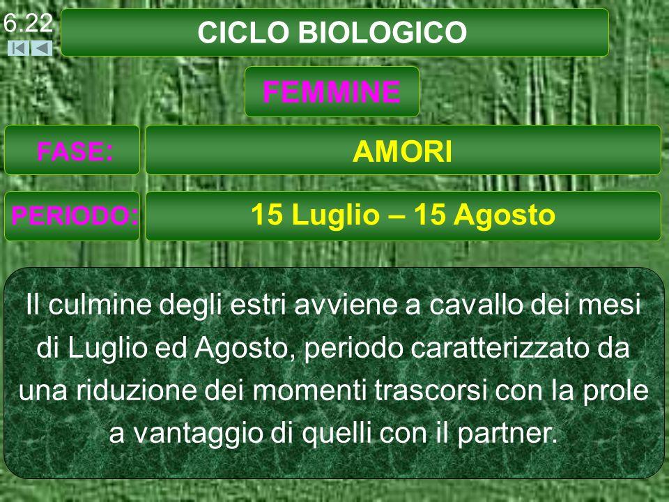 CICLO BIOLOGICO FEMMINE AMORI 15 Luglio – 15 Agosto