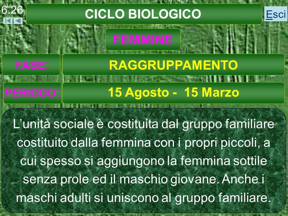CICLO BIOLOGICO FEMMINE RAGGRUPPAMENTO 15 Agosto - 15 Marzo