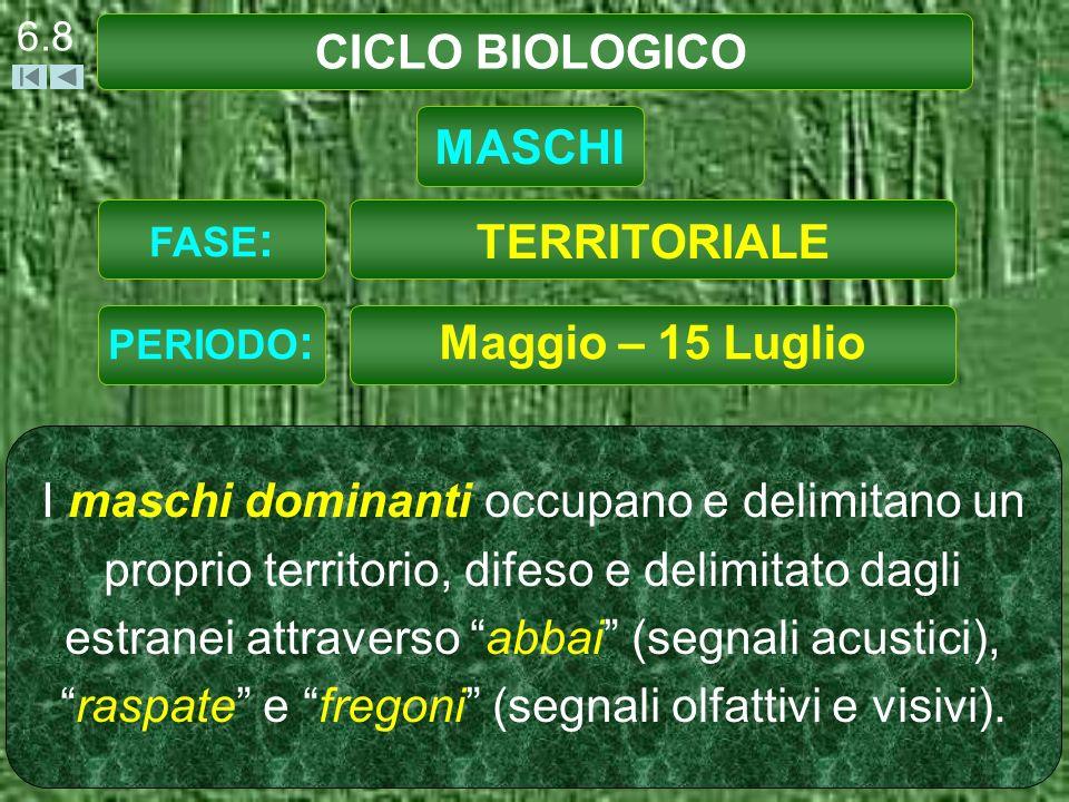 CICLO BIOLOGICO MASCHI TERRITORIALE Maggio – 15 Luglio