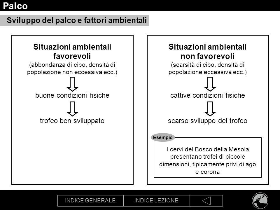 Palco Sviluppo del palco e fattori ambientali