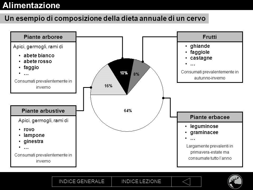 Alimentazione Un esempio di composizione della dieta annuale di un cervo. Piante arboree. Frutti.