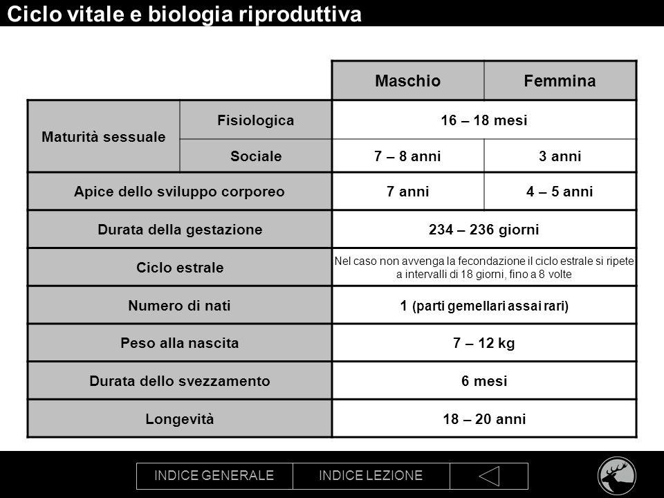 Ciclo vitale e biologia riproduttiva