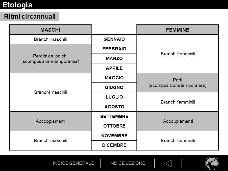 Etologia Ritmi circannuali MASCHI FEMMINE Branchi maschili GENNAIO