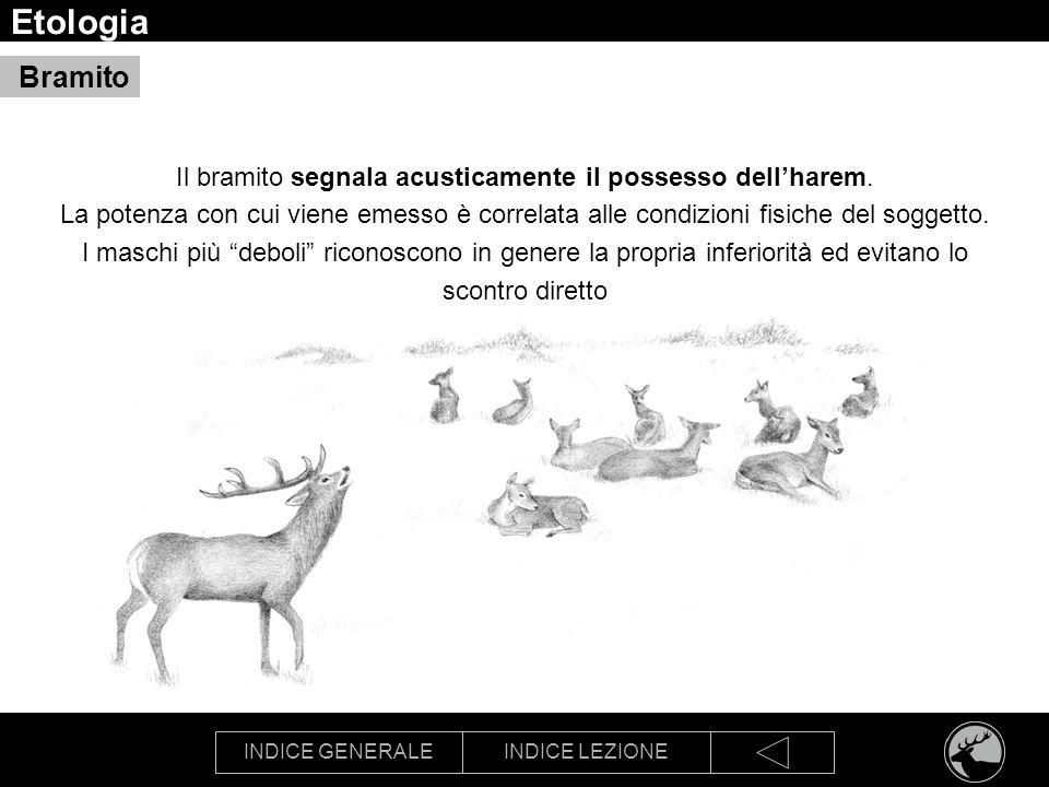 Etologia Bramito.