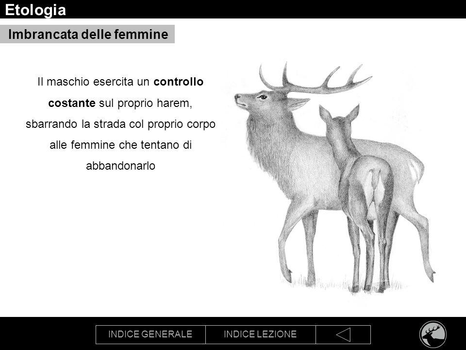 Etologia Imbrancata delle femmine