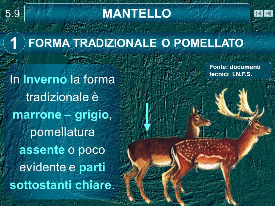 5.9 MANTELLO. 1. FORMA TRADIZIONALE O POMELLATO. Fonte: documenti tecnici I.N.F.S.