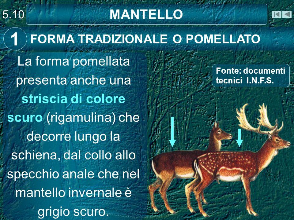 5.10 MANTELLO. 1. FORMA TRADIZIONALE O POMELLATO.
