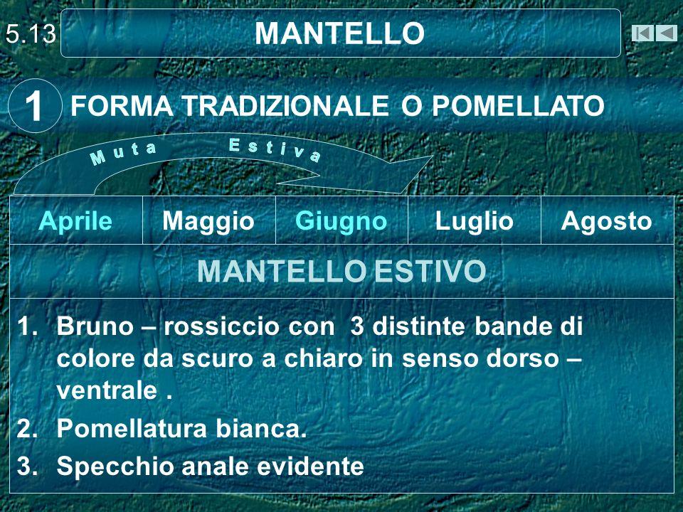 1 MANTELLO MANTELLO ESTIVO FORMA TRADIZIONALE O POMELLATO 5.13 Aprile