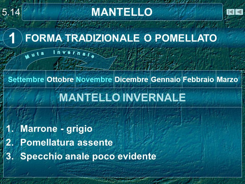 1 MANTELLO MANTELLO INVERNALE FORMA TRADIZIONALE O POMELLATO 5.14