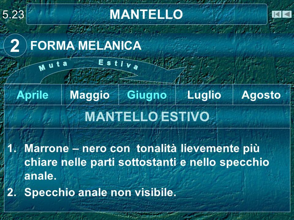 2 MANTELLO MANTELLO ESTIVO FORMA MELANICA 5.23 Aprile Maggio Giugno